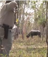 【射猎】复合弓猎杀水牛