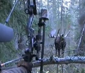 【射猎】人鹿对峙-复合弓狩猎视频